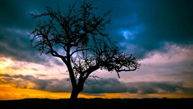 Baum Romantik